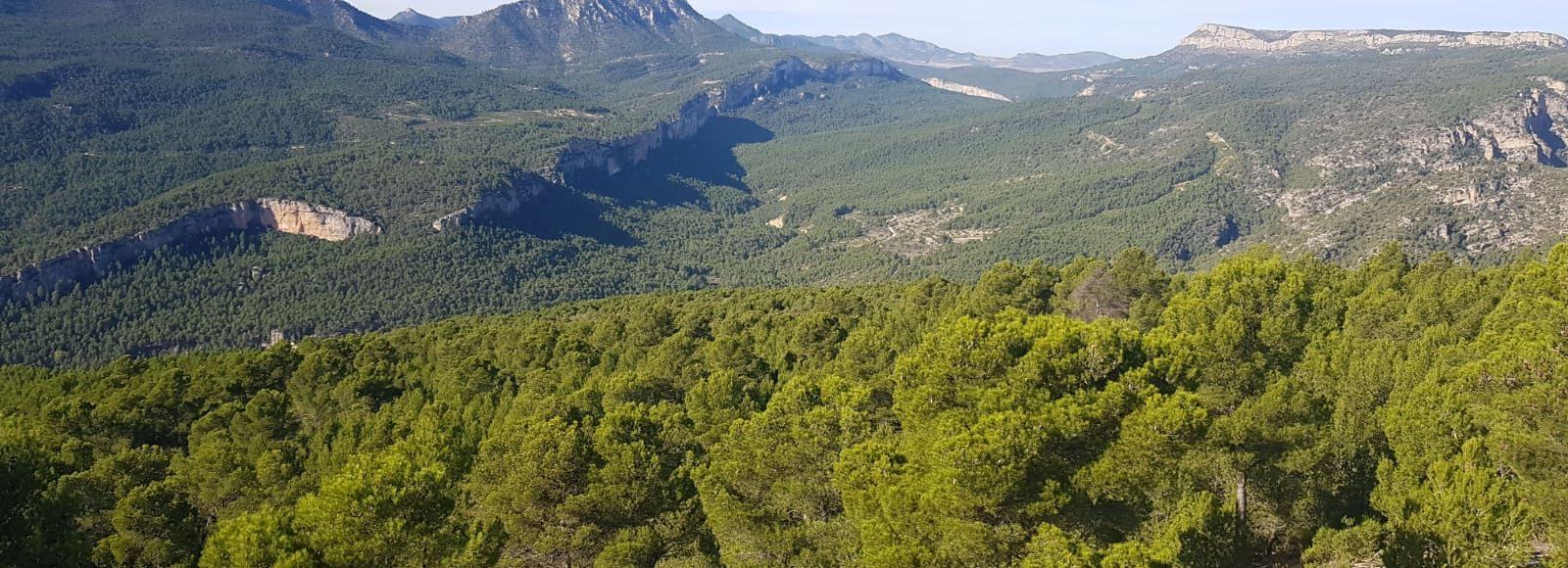 Aportación del Grupo Operativo Biomasmur a los objetivos perseguidos en la COP 25
